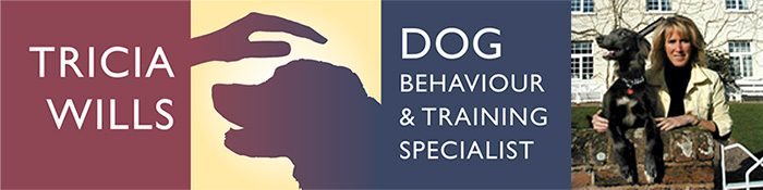 Dog behaviour and training specialist Exeter Devon
