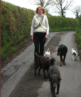 Exeter, Devon Dog Training