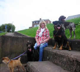 Dog training workshops Exeter