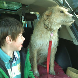 lurcher dog training