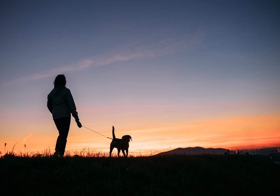 dog training dow walking